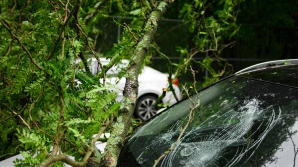 A car of a person who did not have car insurance is damaged by a fallen tree
